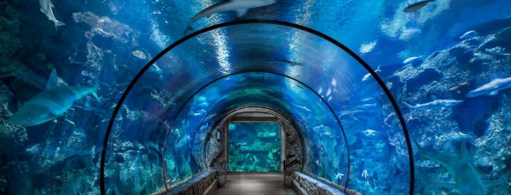 Shark Reef Tunnel at Mandalay Bay